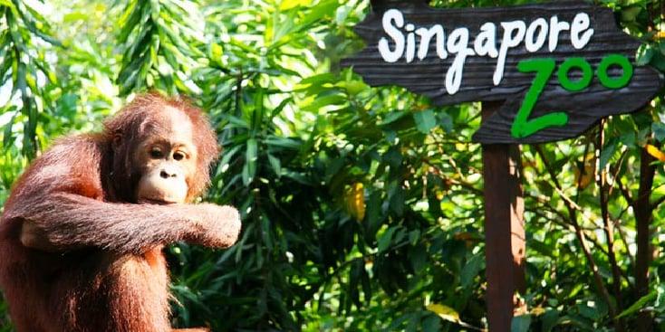 SG_Zoo_Image1-01